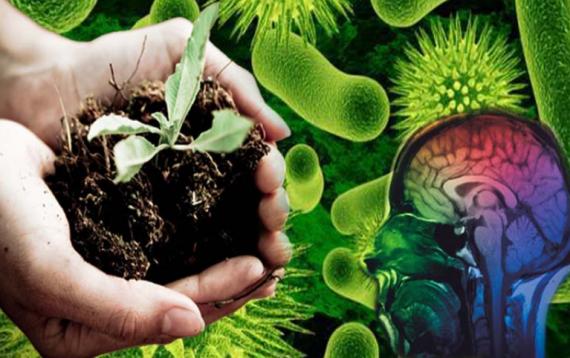 Екологічна просвіта